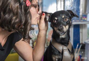 Cómo hablar con perros