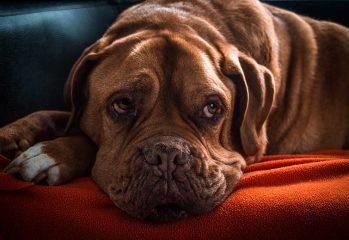 cosas que no debes darle a tu perro