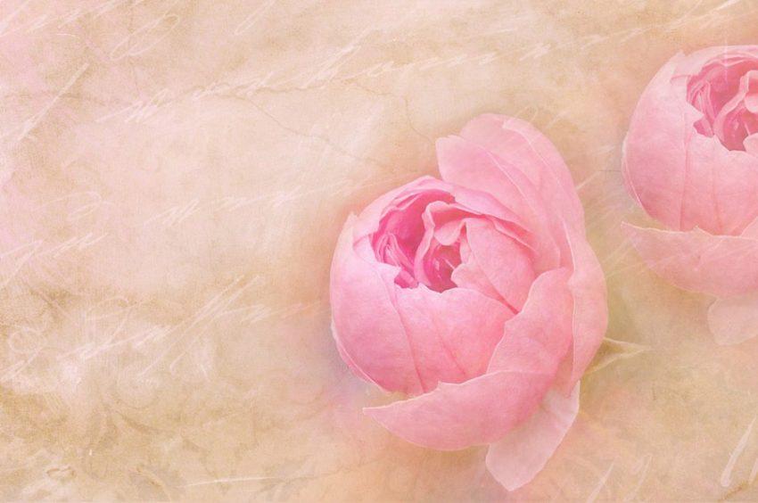 Como Hacer Flores De Papel Hermosas Y Faciles Makia