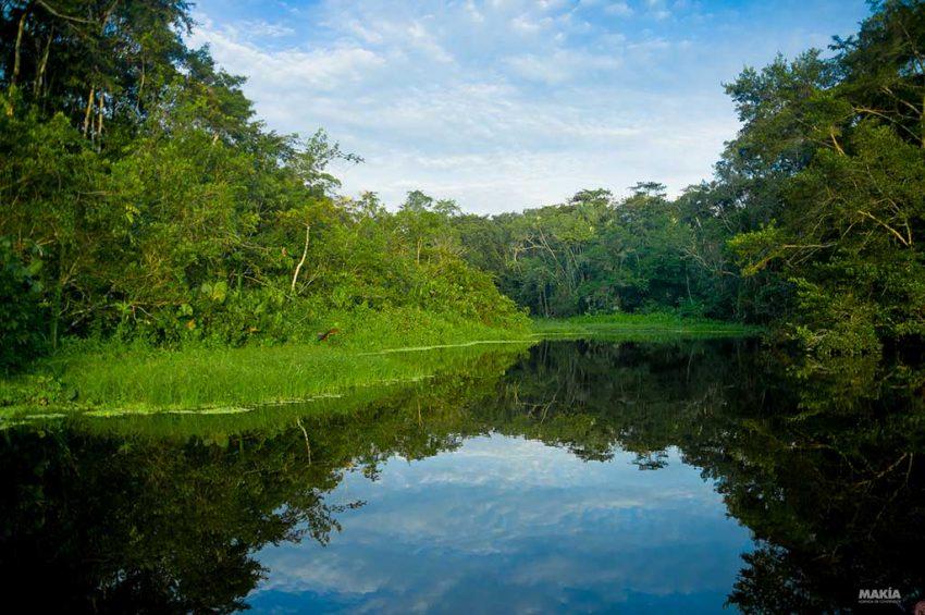 Increíble Isla De La Cocina Amazónica Motivo - Ideas de Decoración ...